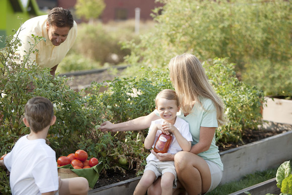 Healthy Lifestyle: Caucasian Family Picking Homegrown Vegetables for Canning