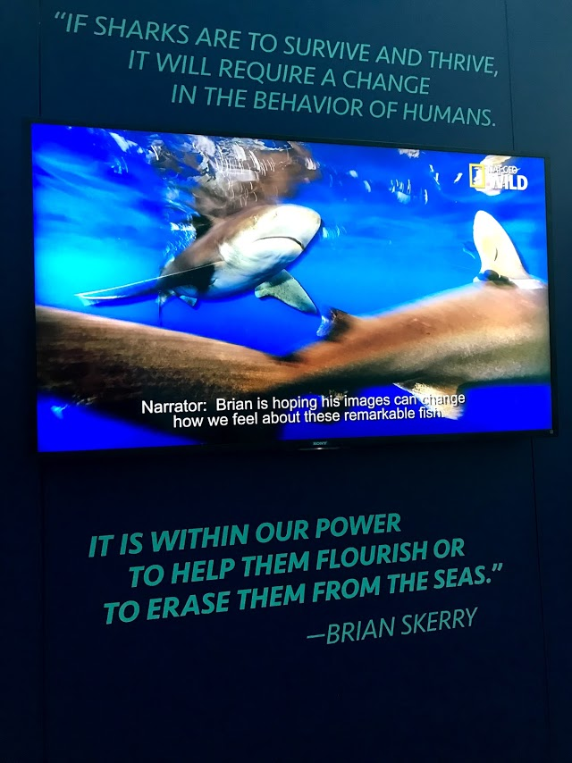 Brian Skerry Sharks